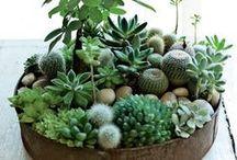 Succulents / lovely hobby / by Muruvvet Simsek