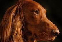 Pet Photography Inspiration