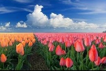 Holland  / by Lisa