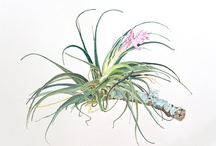 My botanical art / Some of my botanical watercolors. / by Wrenaissance Art