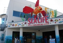 SEA LIFE Aquarium / by LEGOLAND California