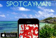 SpotCayman App / SpotCayman is the most comprehensive and complete travel guide to the Cayman Islands. Full, interactive maps for Grand Cayman, Cayman Brac and Little Cayman.