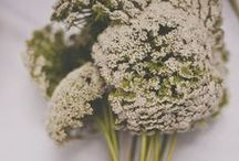 Flowers & Plants / by Besugarandspice