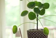 Plants We Love in the Home