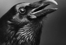 crows / Crows as a fashion inspiration.