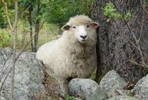 Wool / It's all about wool and sheep.  We use only new and demeter wool in our products.
