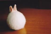 funny bunny / by Marina