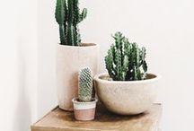 Plantes d'intérieur et jardins