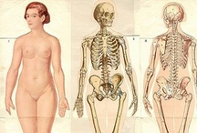 anatomy - pleasant