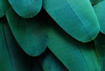 """colours • green— / """"Green is the prime color of the world, and that from which its loveliness arises."""""""