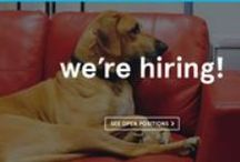 We're Hiring / We're a fast paced eCommerce company located in the Berkshires — a hotbed of culture surrounded by the great outdoors. We believe in wowing customers, in getting shit done, in thinking bigger, and in giving back. Working at Zogics is a bit like being in the Wild West. We like exploring new territory, shaking things up, and taking calculated risks to grow. And we are on the lookout for highly motivated, energetic team players who are excited about tackling things head on!