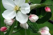 Bonsai_Ikebana_Virágok
