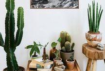 Green Living / Houseplants - A little touch of green