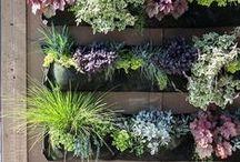 Everyday Garden Arrangements / succulents, color bowls, gardening, planting, planted arrangements, online shopping, year around, gardens, gardening, baskets, containers