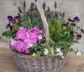 Easter Living Arrangements / shoprogersgardens.com