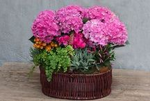 Mother's Day Living Arrangements / The perfect arrangement for any Mother.  shoprogersgardens.com
