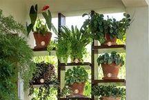 Houseplants, Floral Arrangements, Indoor plants and bulbs etc.