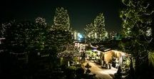 Experience the Holidays at Roger's Gardens / We extend our hours during the holiday season so you and your family can experience the magic at Roger's Gardens.