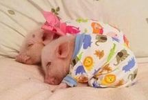Pigs! / Pigs... and other cute animals