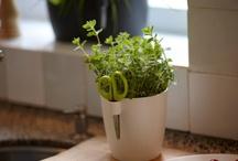 Pots & Herbs & Flowers