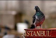 Istanbul / by Inka