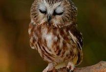 Owl & Deer