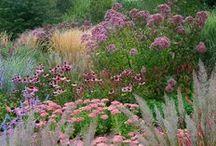 Splendid Flowers and Gardens