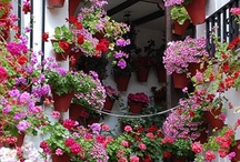 Flowers / by Elyse Freeborn