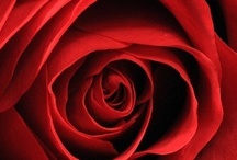 Red Roses. I love it!!