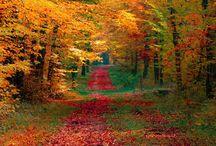 Fall / by Jill Clark