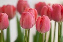 Spring / by Jill Clark