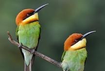 Bird*colorful