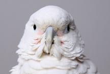 Bird*White