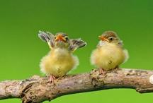 Bird*Yellow