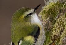 Bird*Green