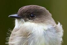 Bird*Brown