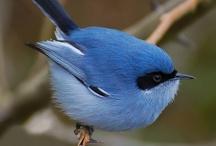 Bird*Blue