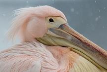 Bird*Pink
