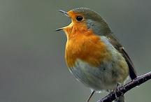 Bird*Orange
