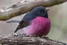 Bird*Lavender