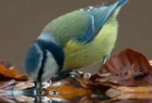 Birds / by Jill Clark