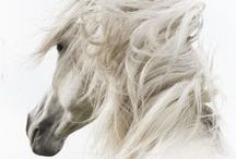 For the Love of Horses / The beauty of equine.