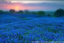 Bluebonnets / by Mary Alice Purvis