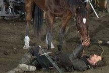 Horses are amazing!