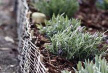 come to my garden / Garden and gardening