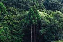 TREES / by Annie Britten