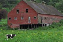 Barns / by Sherrie Beaver