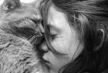| Cats |
