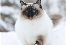 Winter & Cats / CATS. ARE. LOVE.