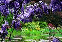 Wisteria / by Sherrie Beaver